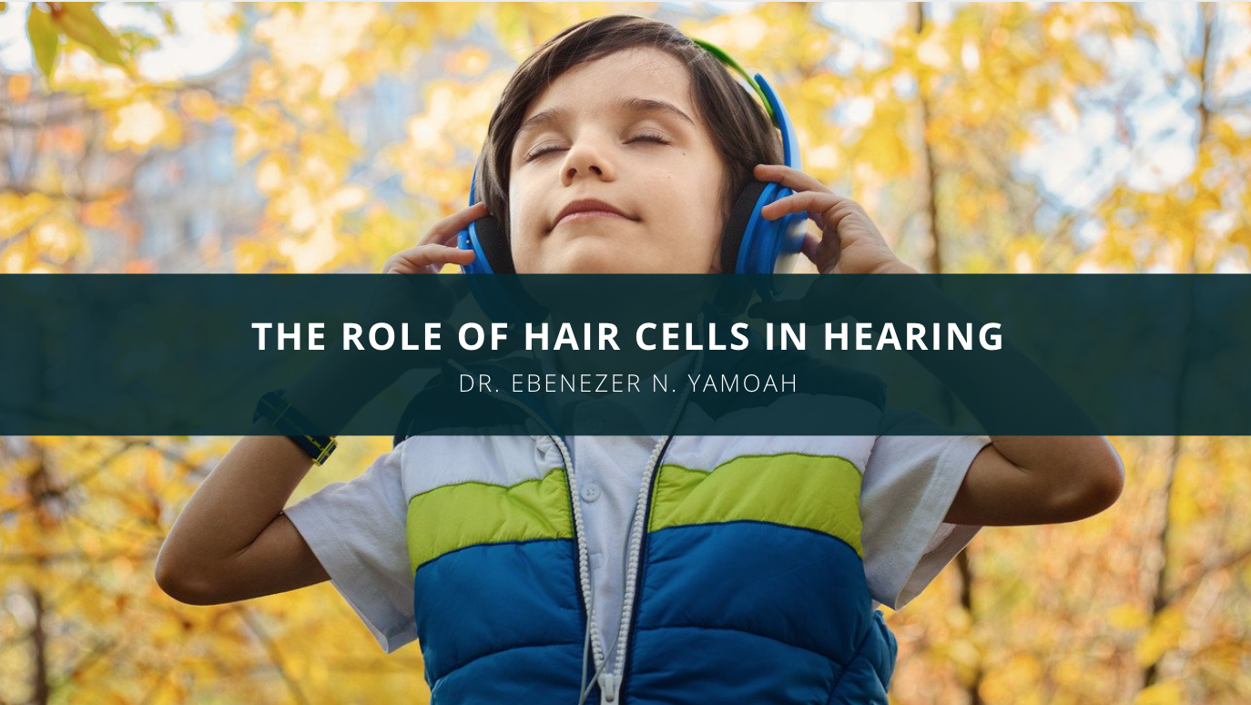 Dr. Ebenezer N. Yamoah Discusses the Role of Hair Cells in Hearing